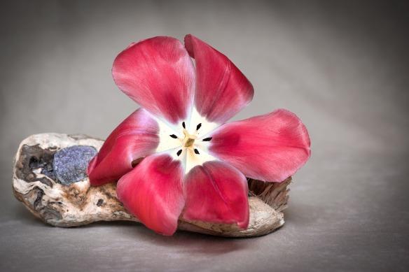 flower-1385756_1920