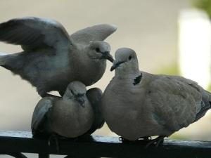 dove-1238314_640