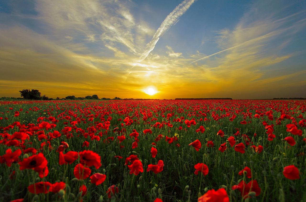 sunset-poppy_1280
