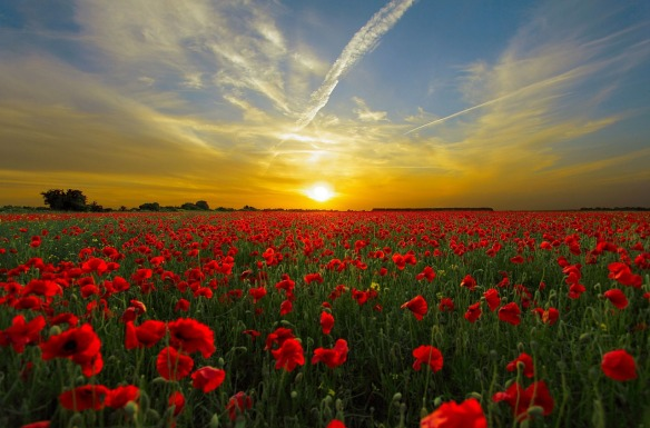 sunset-poppy_1280